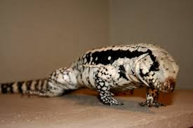 bluetegu